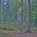 ECOLO Climate Tour: 1ère étape en Forêt de Soignes @ Parking de la Drève du Comte | Watermael-Boitsfort | Bruxelles | Belgique