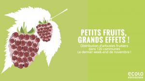 Petits Fruits, Grands Effets - distribution d'arbustes fruitiers @ Marché dominical | Watermael-Boitsfort | Bruxelles | Belgique